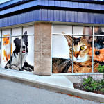 Pet Value Window Graphic 1 by Identify Yourself.ca